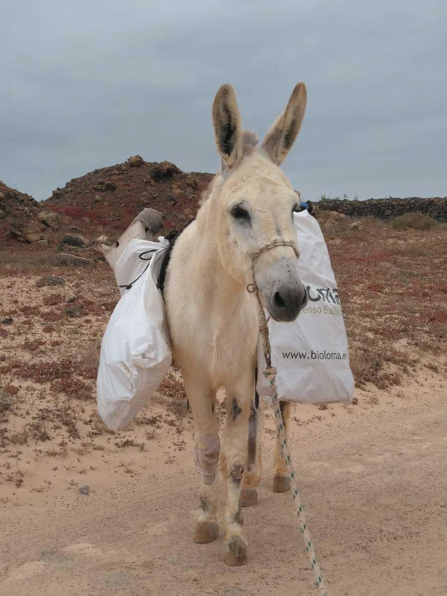 Incluso ellos se ofrecen voluntarios para recoger la basura que las personas dejan en el campo